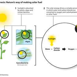Artificial photosynthesis: pathway to fuels