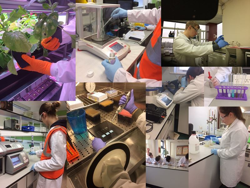 Collage of images depicting apprentices working in laboratory settings.